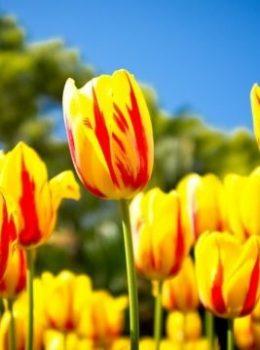 Frühling Briefkästen Hemes