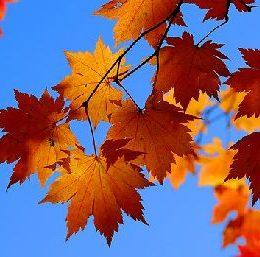 Briefkasten Hemes Herbst Aktion